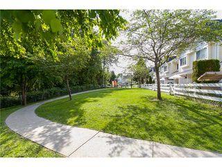 Photo 18: # 14 23560 119TH AV in Maple Ridge: Cottonwood MR Condo for sale : MLS®# V1065890