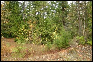 Photo 28:  in Sorrento: Notch Hill Estates Vacant Land for sale : MLS®# 10090155
