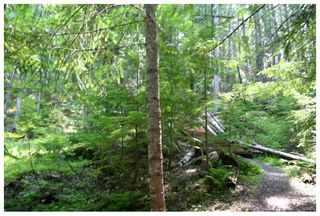 Photo 15: Lot 9 Kali Bay in Eagle Bay: Kali Bay House for sale (Shuswap Lake)  : MLS®# 10125666