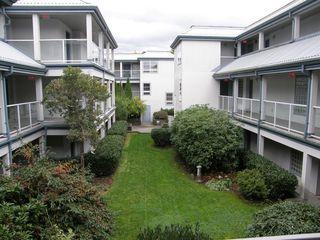 Photo 7: 313 11519 BURNETT Street in STANFORD GARDENS: Home for sale : MLS®# V1091143