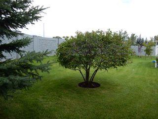Photo 16: 947 Youville Drive in Edmonton: Zone 29 House Half Duplex for sale : MLS®# E4182684