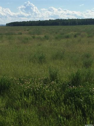 Photo 10: Schroepfer Land in Arborfield: Lot/Land for sale (Arborfield Rm No. 456)  : MLS®# SK827757