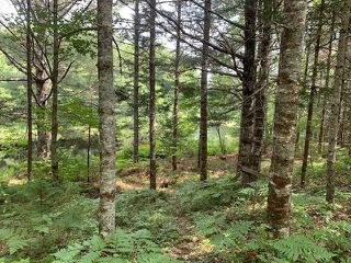 Photo 12: 103 Highway in Sable River: 407-Shelburne County Residential for sale (South Shore)  : MLS®# 202016107