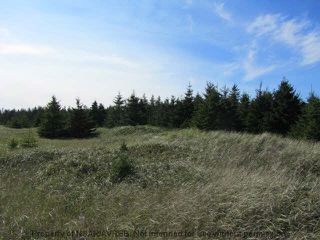 Photo 6: 198 SEASIDE Drive in Louis Head: 407-Shelburne County Residential for sale (South Shore)  : MLS®# 4686576