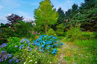 Photo 26: 10403 127 Street in Surrey: Cedar Hills House for sale (North Surrey)  : MLS®# R2483764