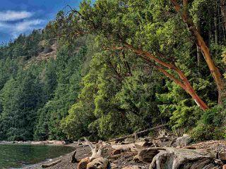 Photo 30: 261 ESPLANADE Road: Keats Island House for sale (Sunshine Coast)  : MLS®# R2463162