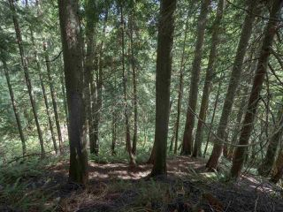 Photo 2: B - 778 CREEKSIDE Crescent in Gibsons: Gibsons & Area House 1/2 Duplex for sale (Sunshine Coast)  : MLS®# R2422485