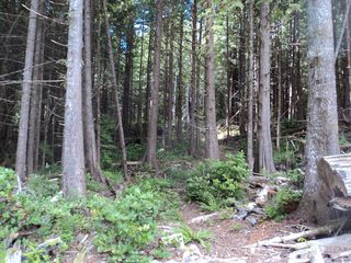 Photo 3: Lot 3 Crane Road: Bamfield Land for sale (Vancouver Island)  : MLS®# 397584