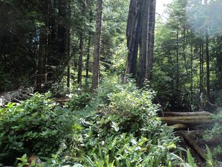 Photo 4: Lot 3 Crane Road: Bamfield Land for sale (Vancouver Island)  : MLS®# 397584