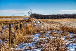Photo 3: 64099 296 Ave. E: Rural Foothills County Land for sale : MLS®# A1049807