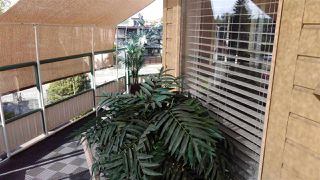 """Photo 31: 313 20140 56 Avenue in Langley: Langley City Condo for sale in """"Park Place"""" : MLS®# R2517442"""
