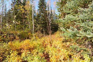 """Photo 4: Lot 8 GLACIER VIEW Road in Smithers: Smithers - Rural Land for sale in """"Silvern Estates"""" (Smithers And Area (Zone 54))  : MLS®# R2410914"""