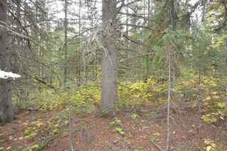 """Photo 10: Lot 8 GLACIER VIEW Road in Smithers: Smithers - Rural Land for sale in """"Silvern Estates"""" (Smithers And Area (Zone 54))  : MLS®# R2410914"""