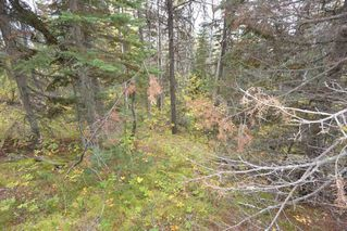 """Photo 11: Lot 8 GLACIER VIEW Road in Smithers: Smithers - Rural Land for sale in """"Silvern Estates"""" (Smithers And Area (Zone 54))  : MLS®# R2410914"""