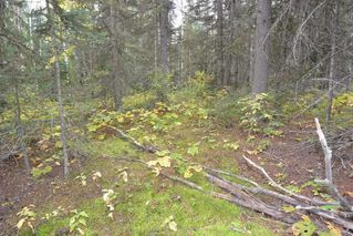 "Photo 14: Lot 8 GLACIER VIEW Road in Smithers: Smithers - Rural Land for sale in ""Silvern Estates"" (Smithers And Area (Zone 54))  : MLS®# R2410914"