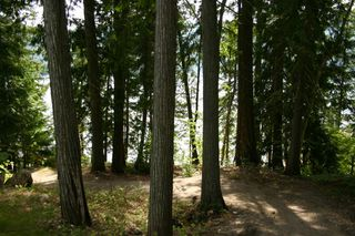 Photo 41: 11 6432 Sunnybrae Road in Tappen: Steamboat Shores Vacant Land for sale (Shuswap Lake)  : MLS®# 10155187