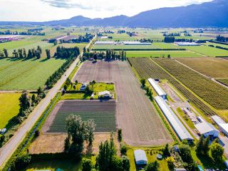 Photo 36: 41205 NO.4 Road in Abbotsford: Sumas Prairie House for sale : MLS®# R2467603