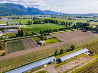 Photo 34: 41205 NO.4 Road in Abbotsford: Sumas Prairie House for sale : MLS®# R2467603