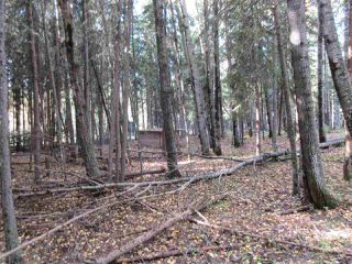 Photo 14: RR 214 Twp Rd 624: Rural Thorhild County Rural Land/Vacant Lot for sale : MLS®# E4174610