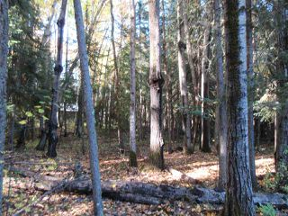 Photo 27: RR 214 Twp Rd 624: Rural Thorhild County Rural Land/Vacant Lot for sale : MLS®# E4174610