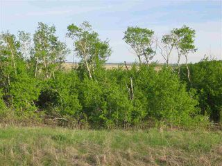 Photo 4: 45063B TWP RD 734 (KLESKUN WEST): Rural Grande Prairie County Rural Land/Vacant Lot for sale : MLS®# E4190065