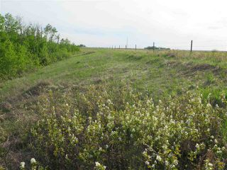 Photo 8: 45063B TWP RD 734 (KLESKUN WEST): Rural Grande Prairie County Rural Land/Vacant Lot for sale : MLS®# E4190065