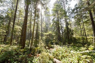 Photo 14: Lot 191 Brent Rd in : CV Comox Peninsula Land for sale (Comox Valley)  : MLS®# 855702