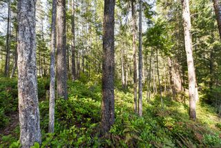 Photo 7: Lot 191 Brent Rd in : CV Comox Peninsula Land for sale (Comox Valley)  : MLS®# 855702