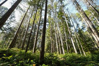 Photo 17: Lot 191 Brent Rd in : CV Comox Peninsula Land for sale (Comox Valley)  : MLS®# 855702