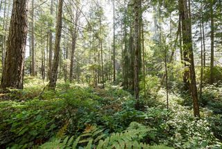 Photo 11: Lot 191 Brent Rd in : CV Comox Peninsula Land for sale (Comox Valley)  : MLS®# 855702