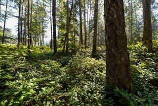 Photo 15: Lot 191 Brent Rd in : CV Comox Peninsula Land for sale (Comox Valley)  : MLS®# 855702