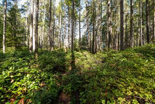 Photo 16: Lot 191 Brent Rd in : CV Comox Peninsula Land for sale (Comox Valley)  : MLS®# 855702