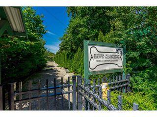 """Photo 31: 4 15850 26 Avenue in Surrey: Grandview Surrey Condo for sale in """"Summit House at Morgan Crossing 2"""" (South Surrey White Rock)  : MLS®# R2471522"""