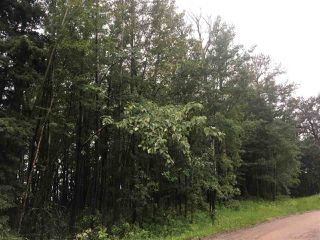 Photo 35: 49024 Range Road 73: Rural Brazeau County House for sale : MLS®# E4204541