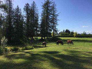 Photo 29: 558 248 STREET in Langley: Agriculture for sale : MLS®# C8034821