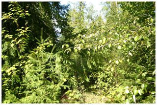 Photo 29:  in Eagle Bay: Vacant Land for sale : MLS®# 10105920