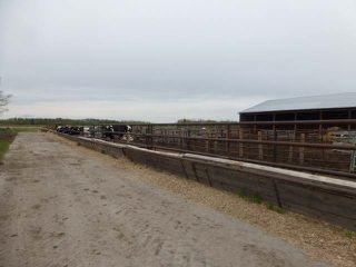 Photo 31: 48354 RR 255: Rural Leduc County House for sale : MLS®# E4198536