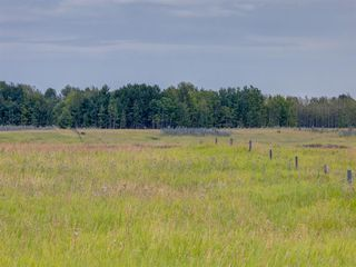 Photo 7: 17ac NORTH of DUNBOW Rd 48 Street: Rural Foothills County Land for sale : MLS®# A1025960