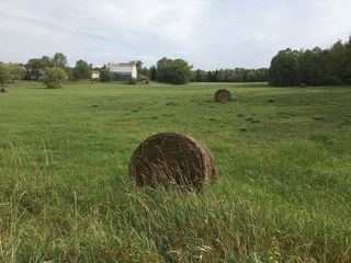 Photo 4: Lot 1 7118 Highway 6 in Three Brooks: 108-Rural Pictou County Vacant Land for sale (Northern Region)  : MLS®# 202020993