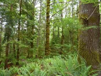 property features a nice mix of large ferns and mature trees.