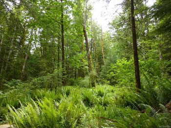 SL 5 in Fir Crest Acres, a fully serviced 2.47 acre lot!