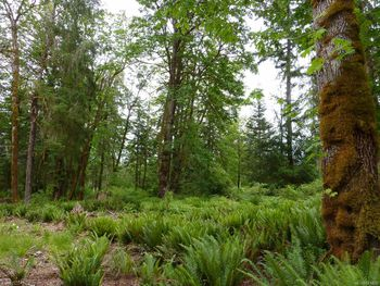property features a nice mix of large ferns and mature trees