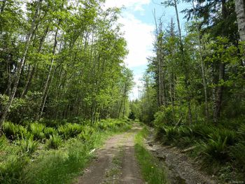 trail that runs along the west side of SL 12